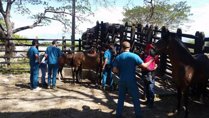 Convocatoria Docente de Planta para Programa de Medicina Veterinaria y Zootecnia de Cartagena (Histoembriología y Patología General)
