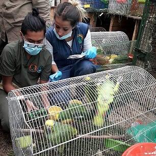 Salen 190 animales para Bolivar del Centro de Fauna Silvestre (Convenio U.D.C.A-IDPYBA)