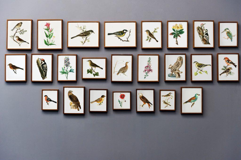 animal-art-art-gallery-730803