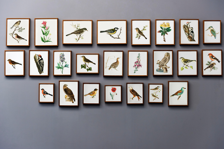 Aves de la Sabana de Bogotá bajo amenaza