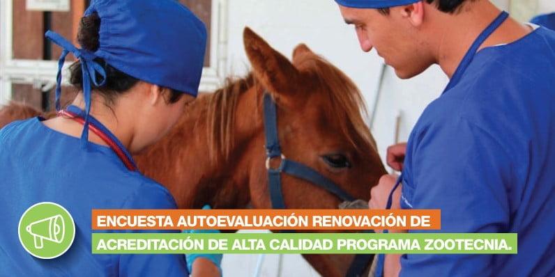 Encuesta Autoevaluación Renovación de Acreditación de Alta Calidad Programa Zootecnia