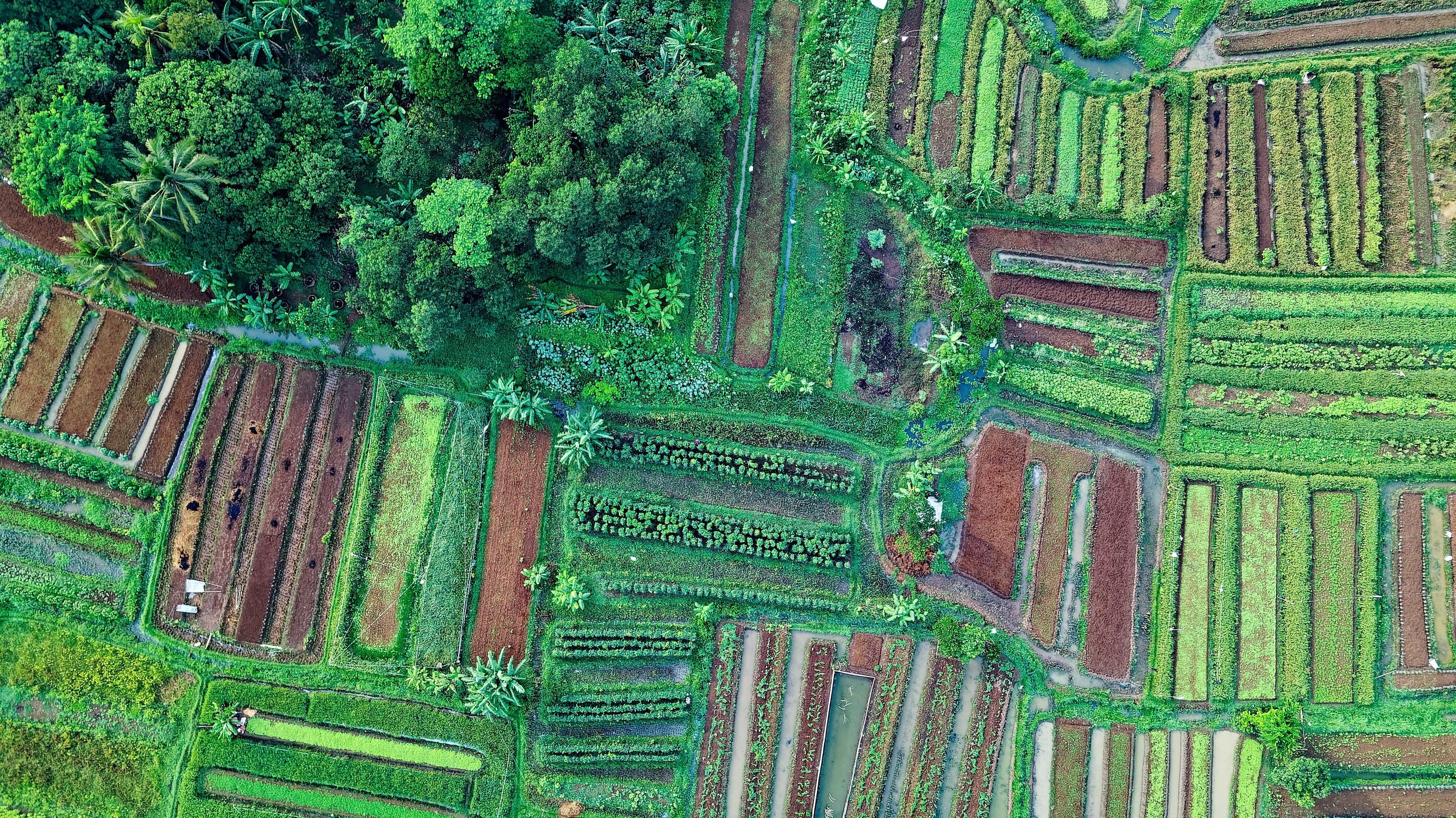 Curso de Extensión en Diseño de Huertos Agroecológicos Innovodores