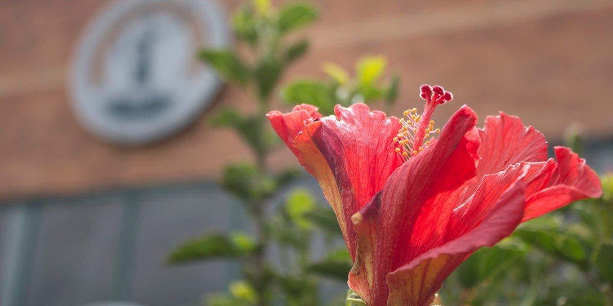 Flora biodiversa U.D.C.A: Un campus para la sostenibilidad